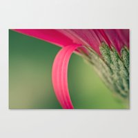 Crimson Canvas Print