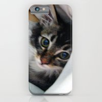 Kitten in Covers iPhone 6 Slim Case