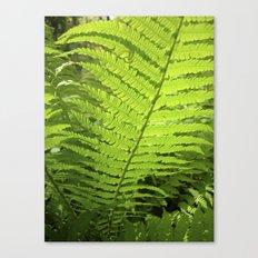 green fern leaf XXVI Canvas Print
