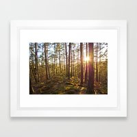 Evening In The Forest Framed Art Print