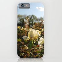iPhone & iPod Case featuring Rose Garden Sunshine by catzzz