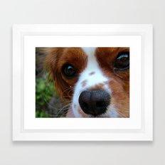 Cavalier King Charles Spaniel Framed Art Print