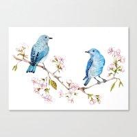 Mountain Bluebirds On Sa… Canvas Print