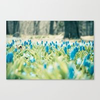 Grounded Canvas Print