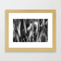 Morning dew Black&white 8548  Framed Art Print