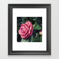 Camelia Framed Art Print