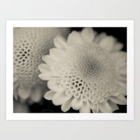 Honeycomb Daisy Flower Art Print