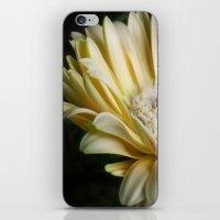 Pale Gerbera iPhone & iPod Skin