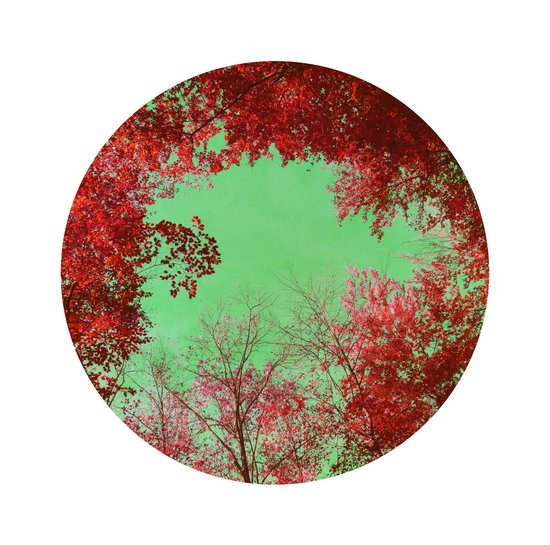 red trees Art Print