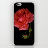 For Rose iPhone & iPod Skin