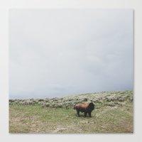 Hillside Bison Canvas Print