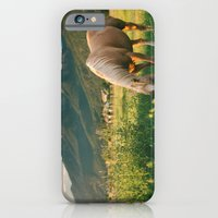 Pretty Horse Eating Grass in the Montana Sunset iPhone 6 Slim Case