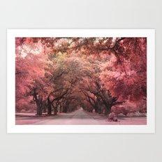 Autumn Fall Charleston South Carolina Oak Trees Art Print