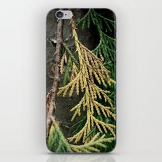 Cedar branch iPhone & iPod Skin