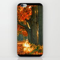 Oak trees  iPhone & iPod Skin