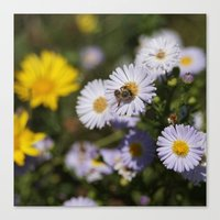 Looking For Honey For Yo… Canvas Print
