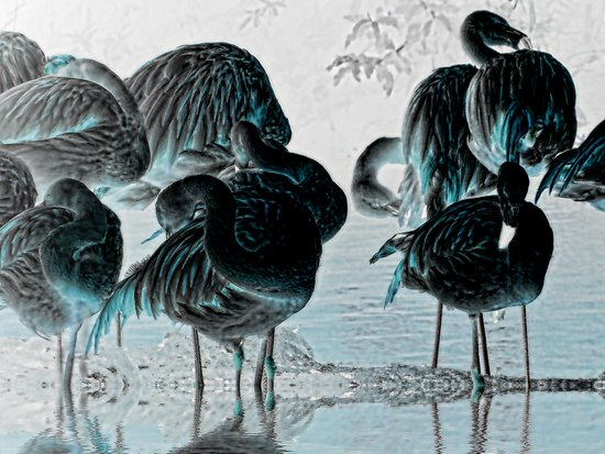 Exotic Flamingos Art Print