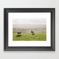 Sunlit sheep on a hilltop at sunset. Derbyshire, UK. Framed Art Print