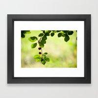 Cherries 5318 Framed Art Print