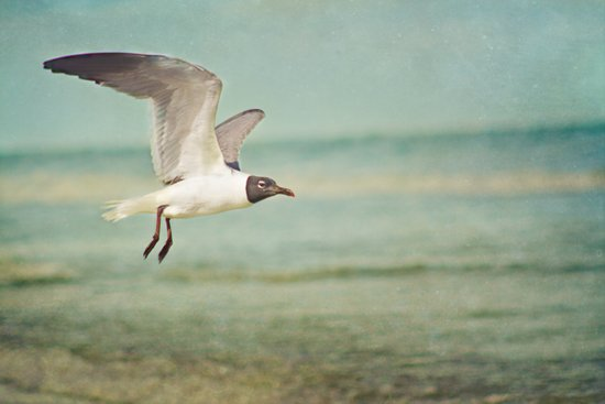 """""""The Seagull see farthest who flies highest."""" --Proverbs quote Art Print"""