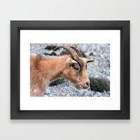 Beige Goat portrait 8149 Framed Art Print