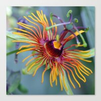 Groovy Passion Canvas Print