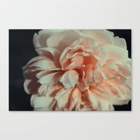 Wildeve Rose No. 1 Canvas Print