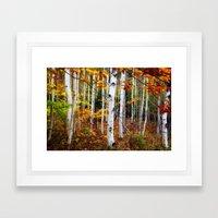 Acadia Fall color Framed Art Print