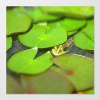 green frog I Canvas Print