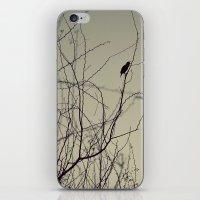 chirping bird iPhone & iPod Skin
