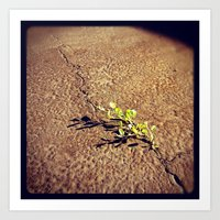 Growth From The Cracks. Art Print