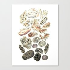 Hawaiian Treasures Canvas Print