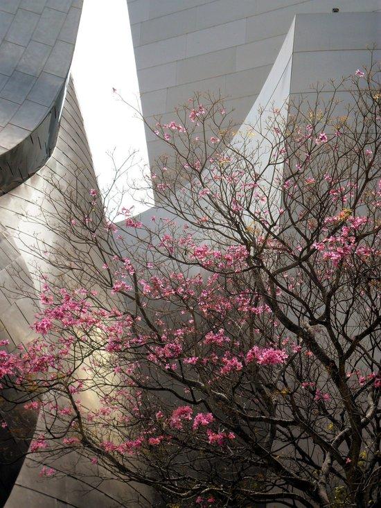 City Blossoms Canvas Print