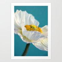 white poppy II Art Print