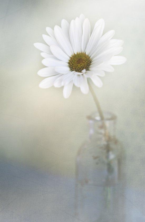 Simply daisy Art Print