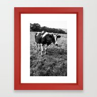 Black And White Cow Framed Art Print