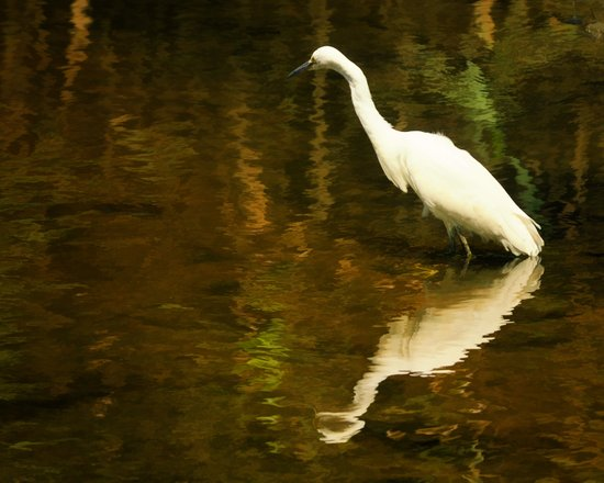 White Heron on Mill pond Art Print