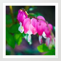Heart of My Hearts.  Bleeding Hearts Photograph.  Macro Photography Art Print