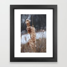 Cattail Framed Art Print