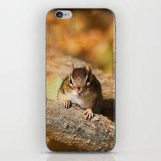 The Chipmunk Portrait iPhone & iPod Skin