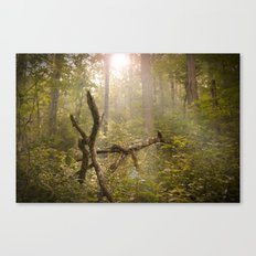 Magical Appalachia Canvas Print