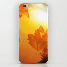 Lief of autumn iPhone & iPod Skin
