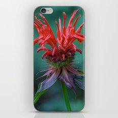Scarlet Bee Balm {Monarda didyma L.} iPhone & iPod Skin