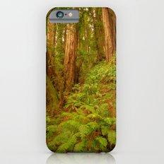 Redwoods Regional II iPhone 6s Slim Case