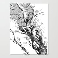 tree nymph Canvas Print