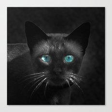 Siamese Blue Canvas Print