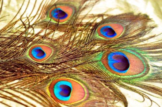 Feathers... Art Print