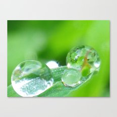 drops from heaven Canvas Print
