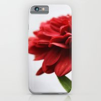 iPhone & iPod Case featuring Chrysanthemum II by goguen
