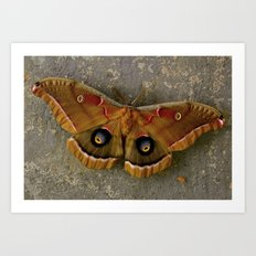 The Art of Nature Art Print